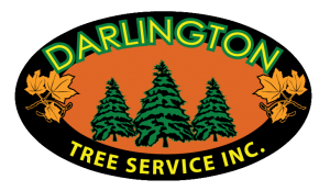 darlington, tree service, arborist, ontario, bowmanville, oshawa, courtice, clarington, whitby, ajax, pickering