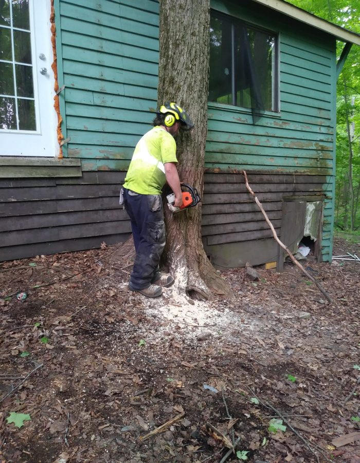 Tree cutting and tree removal Durham Region, Oshawa, Bowmanville, Courtice, Whitby